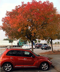 autumnal tree and car